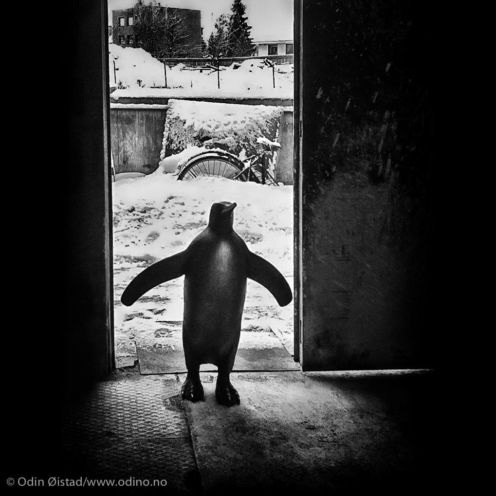 Penguin for Jotun AS
