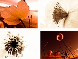 Flora II 120 x 100